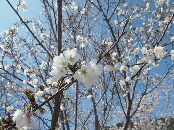 春1.jpg