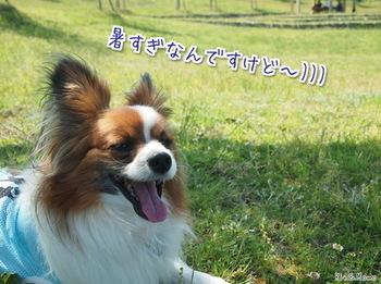 篠山⑦.jpg